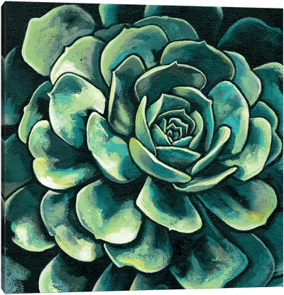 Succulent Bloom II Canvas Art Print
