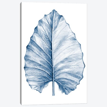 Indigo Tropical Leaves III Canvas Print #MEA57} by Megan Meagher Art Print