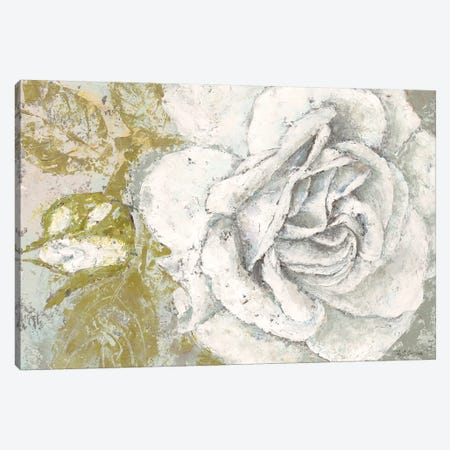 White Rose Blossom Canvas Print #MEC52} by Marie-Elaine Cusson Canvas Wall Art