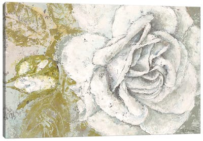 White Rose Blossom Canvas Art Print