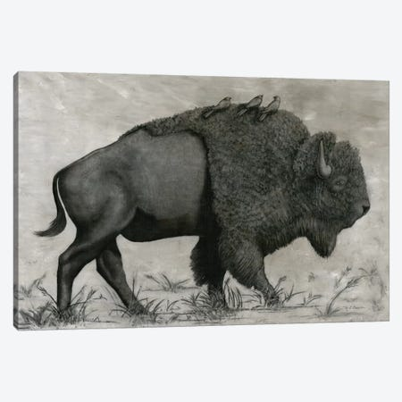 Basking Buffalo Canvas Print #MEC53} by Marie Elaine Cusson Canvas Art