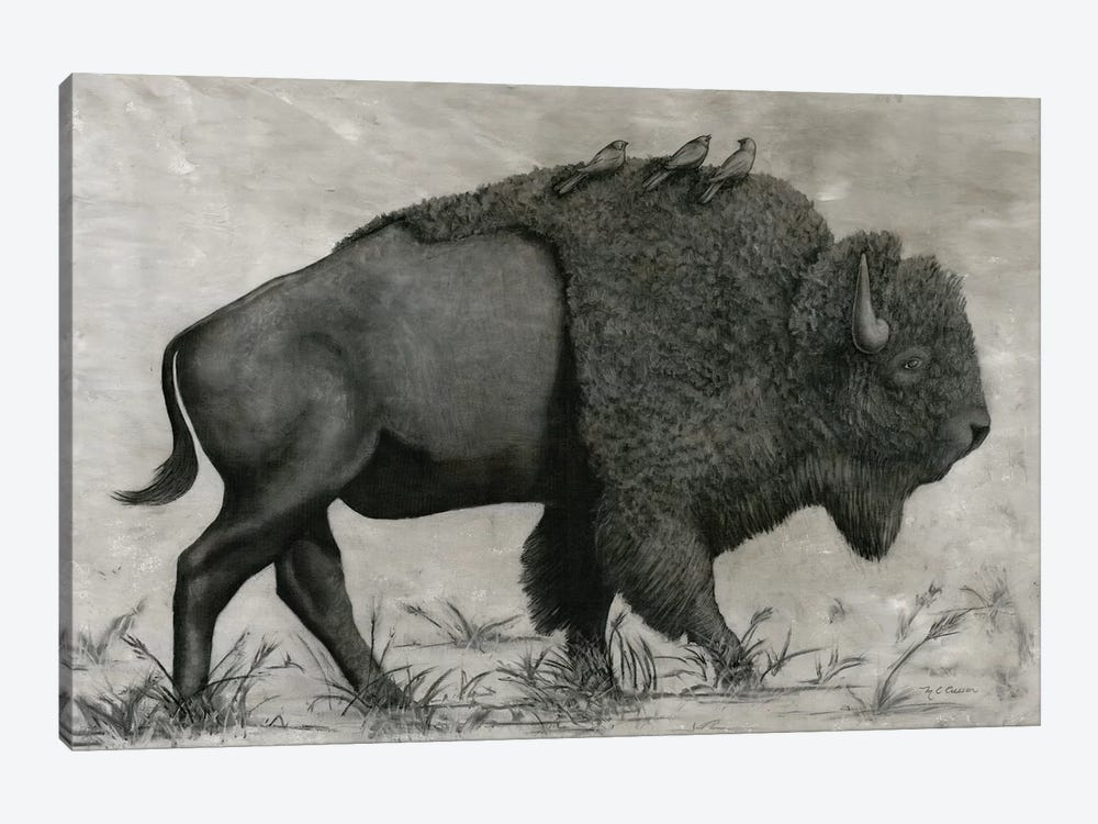 Basking Buffalo by Marie Elaine Cusson 1-piece Canvas Print