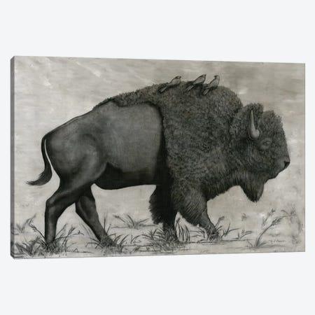 Basking Buffalo Canvas Print #MEC53} by Marie Elaine Cusson Canvas Art