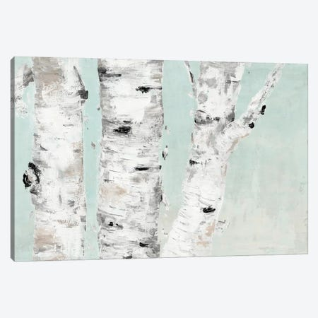 Birch Tree Close Up Canvas Print #MEC55} by Marie Elaine Cusson Canvas Print
