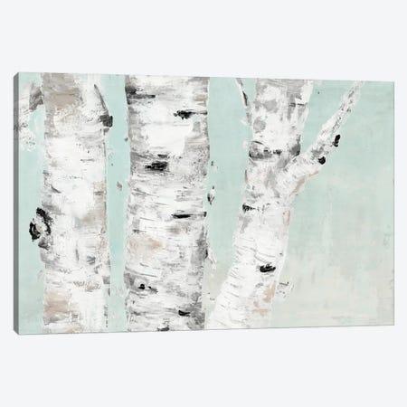 Birch Tree Close Up Canvas Print #MEC55} by Marie Elaine Cusson Canvas Print