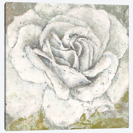 White Rose Blossom Square Canvas Print #MEC69} by Marie-Elaine Cusson Canvas Print