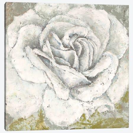 White Rose Blossom Square Canvas Print #MEC69} by Marie Elaine Cusson Canvas Print