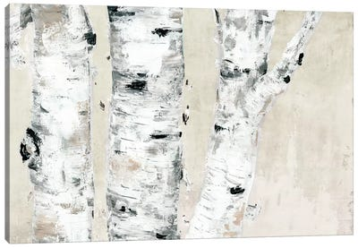 Birch Tree Close Up Neutral Canvas Art Print