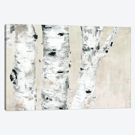 Birch Tree Close Up Neutral 3-Piece Canvas #MEC77} by Marie Elaine Cusson Canvas Art Print