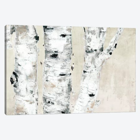 Birch Tree Close Up Neutral Canvas Print #MEC77} by Marie Elaine Cusson Canvas Art Print