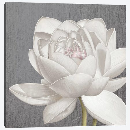 Vintage Lotus on Grey II Canvas Print #MEC91} by Marie Elaine Cusson Canvas Wall Art