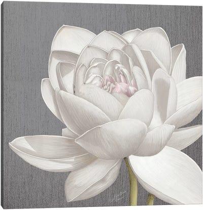 Vintage Lotus on Grey II Canvas Art Print