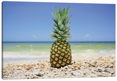 South Florida Pineapple II Canvas Art Print