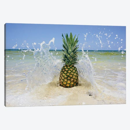 South Florida Pineapple III Canvas Print #MED39} by Adam Mead Canvas Print