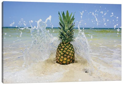 South Florida Pineapple III Canvas Art Print