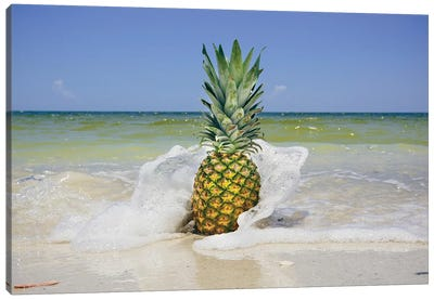 South Florida Pineapple IV Canvas Art Print