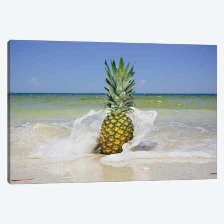 South Florida Pineapple IV Canvas Print #MED40} by Adam Mead Canvas Wall Art