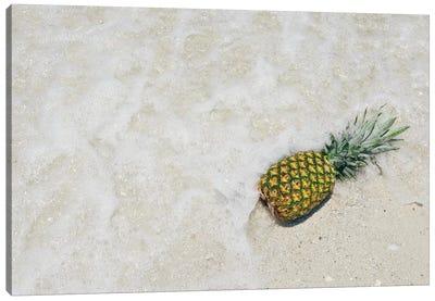 South Florida Pineapple V Canvas Art Print