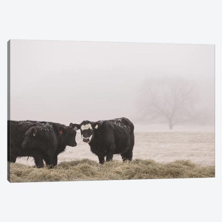 Farm Study I Canvas Print #MED42} by Adam Mead Canvas Art