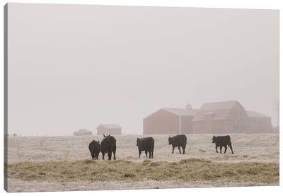 Farm Study IV Canvas Art Print