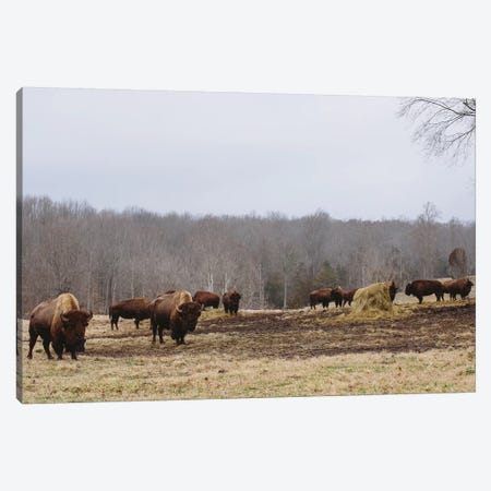 Farm Study VI Canvas Print #MED47} by Adam Mead Art Print