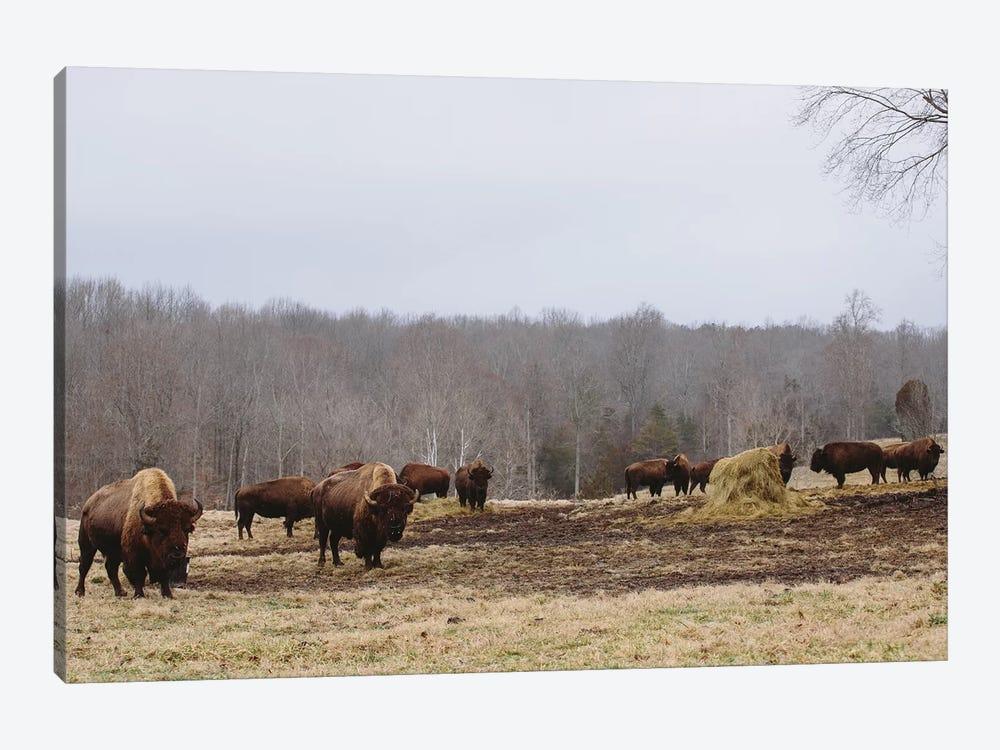 Farm Study VI by Adam Mead 1-piece Canvas Art Print