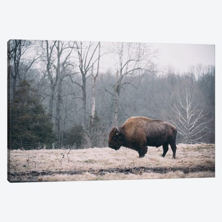 Solitary Bison I Canvas Print #MED49} by Adam Mead Canvas Artwork