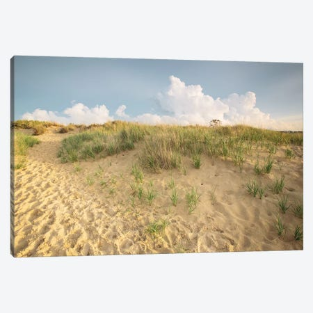 First Landing Dunes IV Canvas Print #MED4} by Adam Mead Canvas Artwork