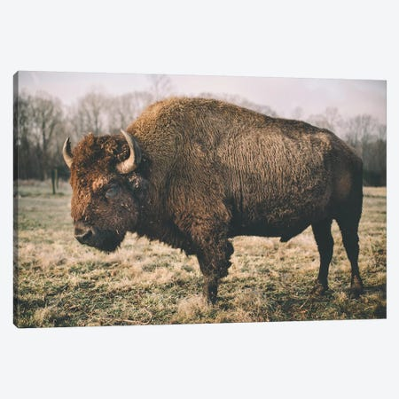 Solitary Bison IV Canvas Print #MED52} by Adam Mead Art Print