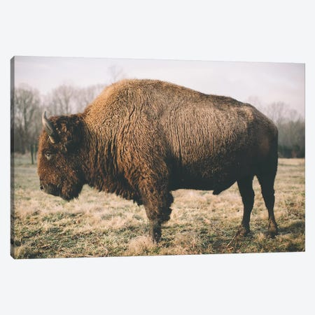 Solitary Bison V Canvas Print #MED53} by Adam Mead Canvas Print
