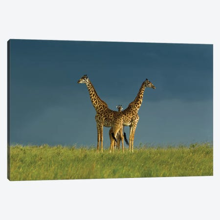 Between The Two Canvas Print #MEI1} by Massimo Mei Canvas Artwork