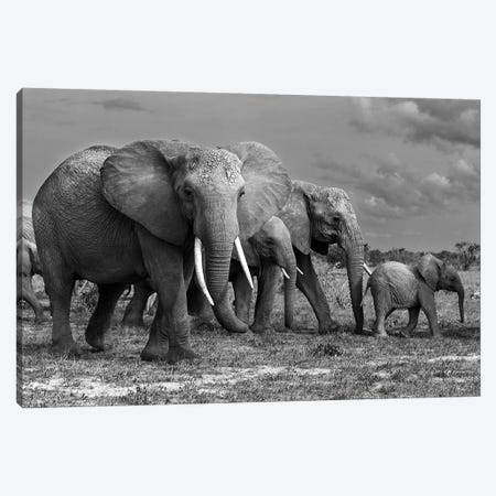 Elephants Family Canvas Print #MEI3} by Massimo Mei Canvas Art