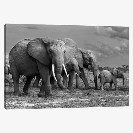 Elephants Family Canvas Print #MEI3} by Massimo Mei Canvas Art