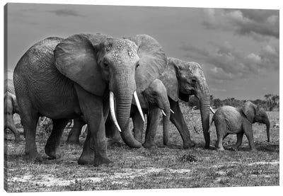 Elephants Family Canvas Art Print
