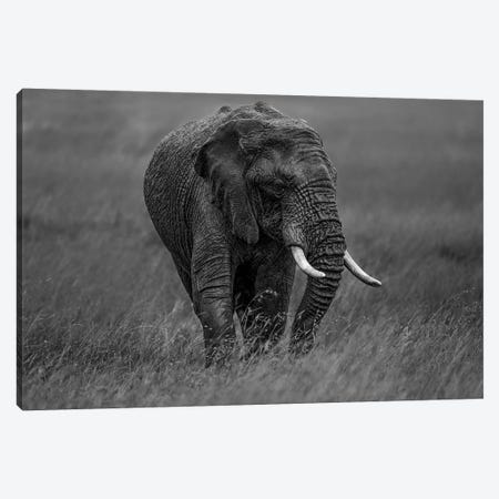 Graphite Canvas Print #MEI4} by Massimo Mei Canvas Art Print