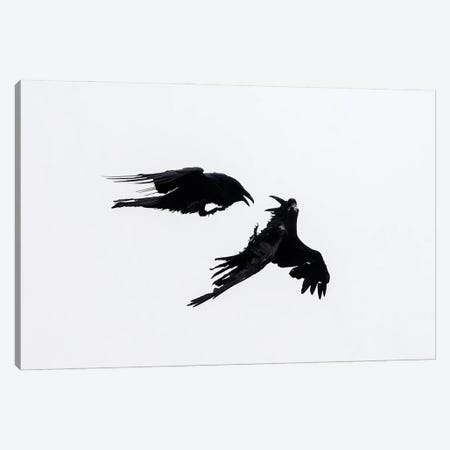 Raven Confrontation Canvas Print #MEO1} by Melissa Groo Canvas Artwork