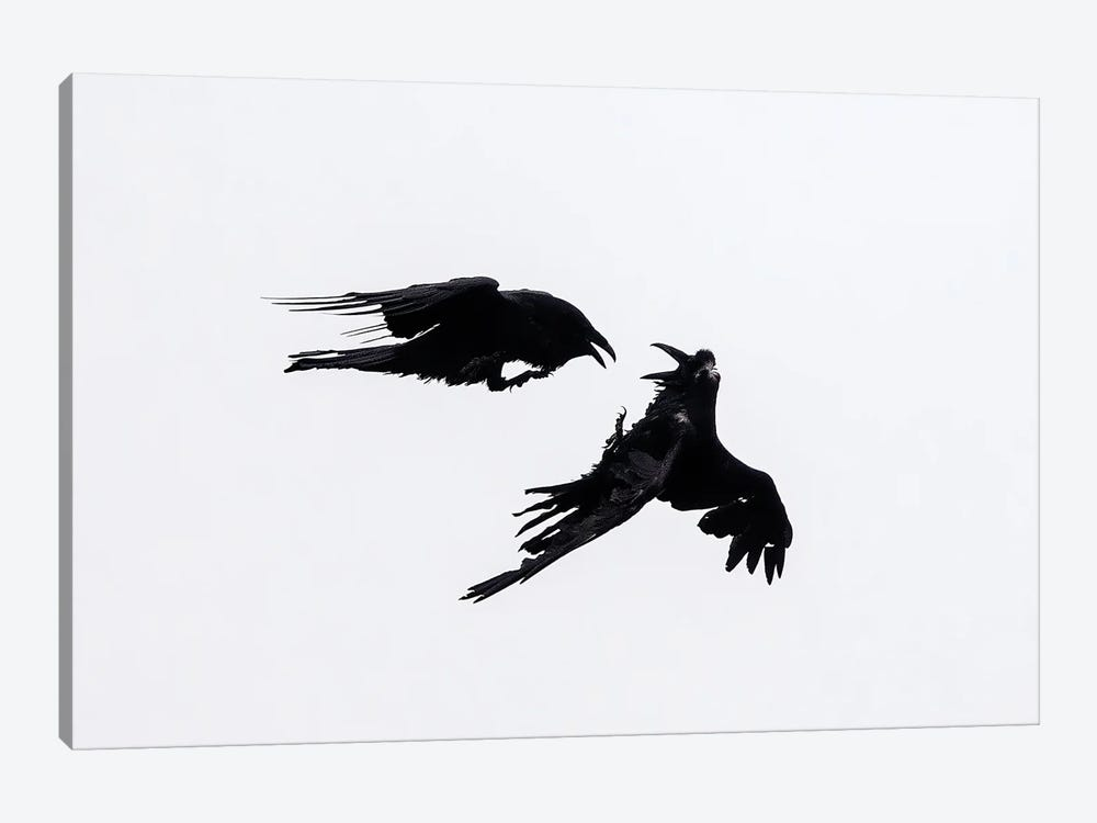 Raven Confrontation by Melissa Groo 1-piece Canvas Wall Art