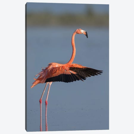 American Flamingo 3-Piece Canvas #MEO23} by Melissa Groo Canvas Print