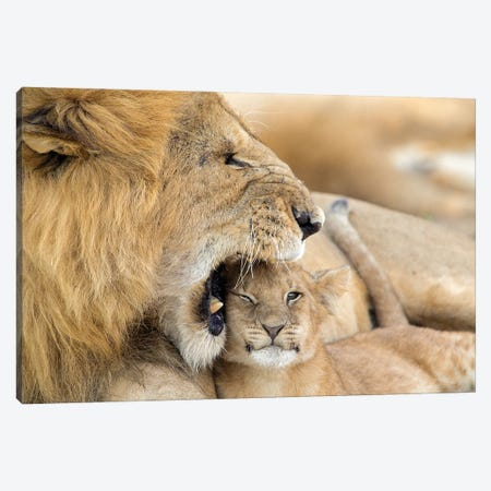 Sleepy Lion Scolds His Cub Canvas Print #MEO27} by Melissa Groo Canvas Artwork