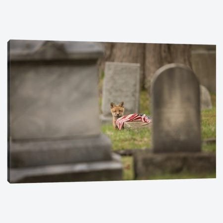 Red Fox Kit in Cemetery with Fallen Flag Canvas Print #MEO42} by Melissa Groo Art Print