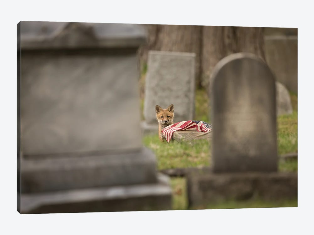 Red Fox Kit in Cemetery with Fallen Flag by Melissa Groo 1-piece Art Print