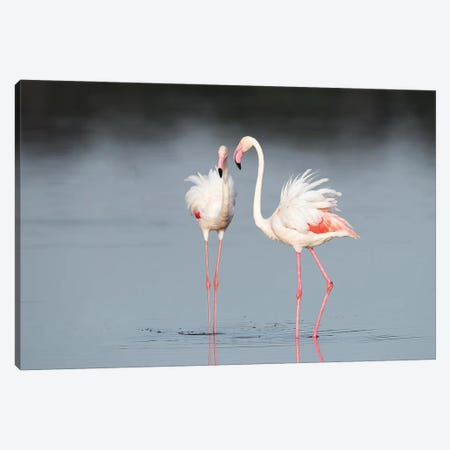 Greater Flamingo Pair in Tanzania Canvas Print #MEO4} by Melissa Groo Art Print
