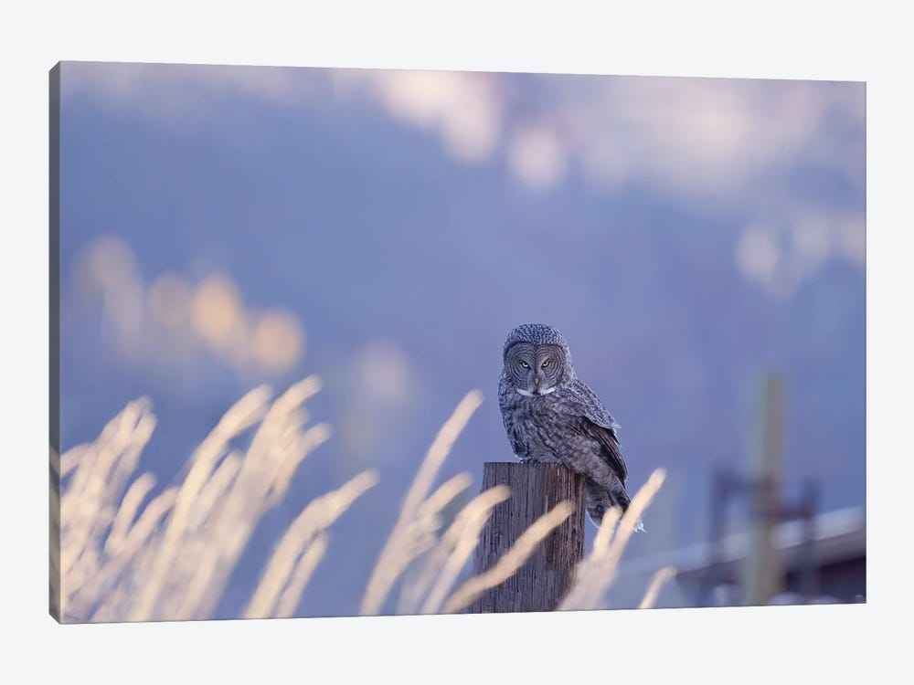 Great Gray Owl Intense in Blue by Melissa Groo 1-piece Canvas Wall Art