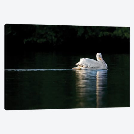 Serene White Pelican Canvas Print #MEO67} by Melissa Groo Canvas Wall Art