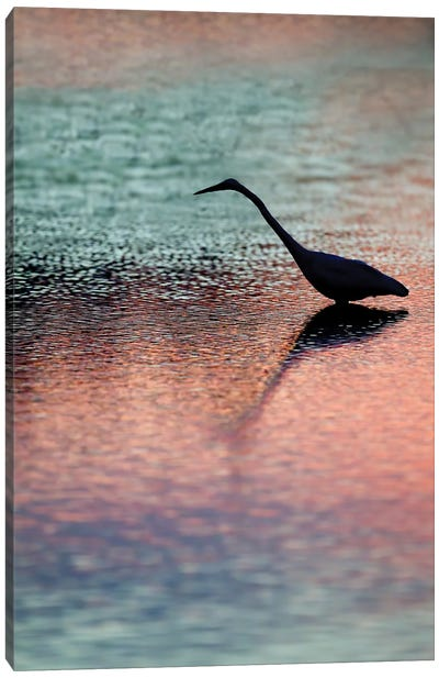 Great Egret Silhouetted at Sunset Canvas Art Print