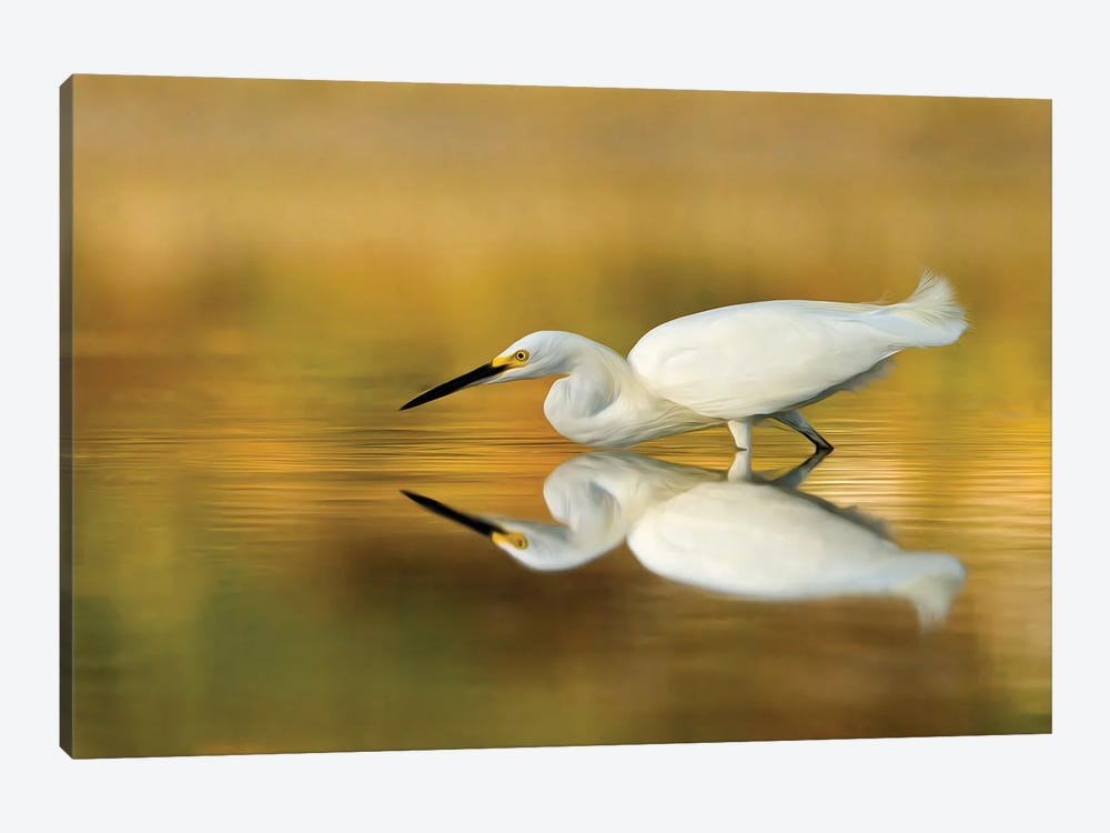 Snowy Egret on the Hunt by Melissa Groo 1-piece Canvas Artwork
