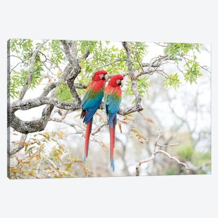 Red-and-Green Macaws, Brazil Canvas Print #MEO8} by Melissa Groo Canvas Wall Art