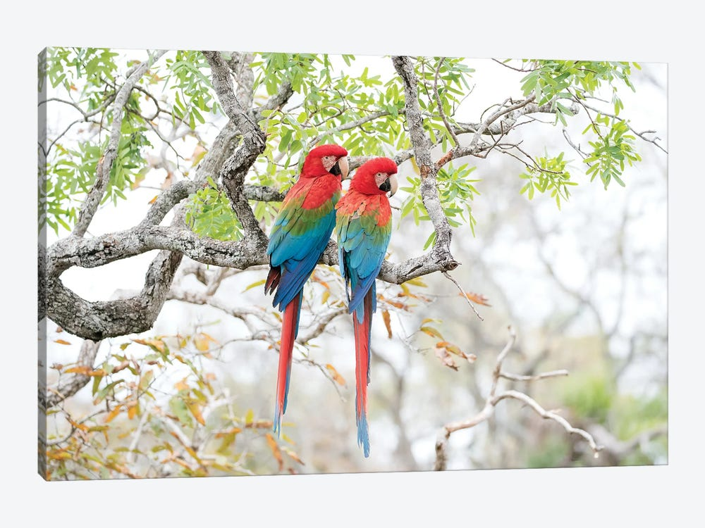 Red-and-Green Macaws, Brazil by Melissa Groo 1-piece Canvas Print