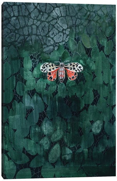 Moth On Leaves Canvas Art Print