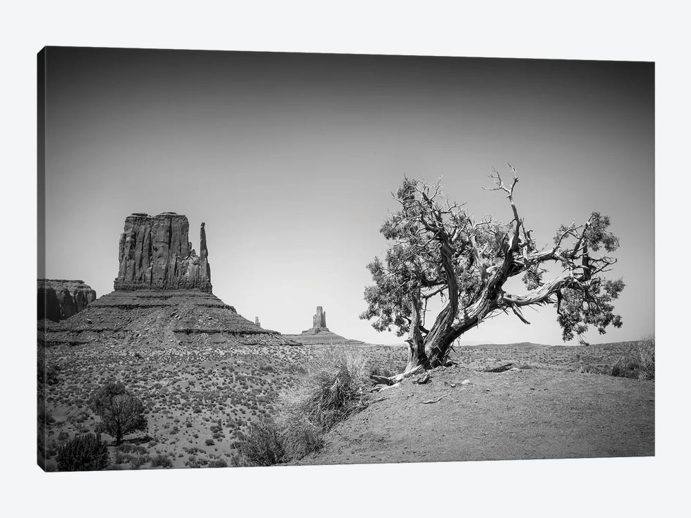 Monument Valley West Mitten Butte And Tree by Melanie Viola 1-piece Canvas Art